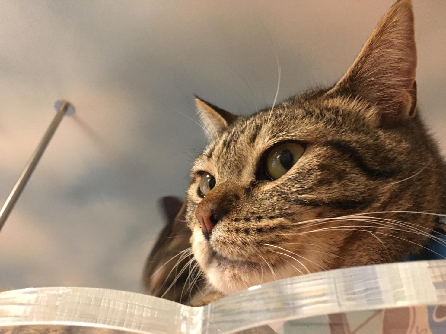 保護猫カフェさくら   いながき動物病院